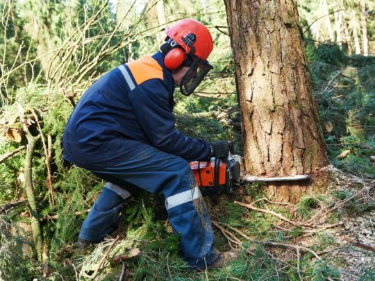 Affordable tree services-Florida Tree Service Pros-We Offer Tree Trimming Services, Tree Removal, Tree Pruning, Tree Cutting, Residential and Commercial Tree Trimming Services, Storm Damage, Emergency Tree Removal, Land Clearing, Tree Companies, Tree Care Service, Stump Grinding, and we're the Best Tree Trimming Company Near You Guaranteed!