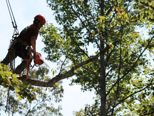 Arborist tree trimming Florida-Florida Tree Service Pros-We Offer Tree Trimming Services, Tree Removal, Tree Pruning, Tree Cutting, Residential and Commercial Tree Trimming Services, Storm Damage, Emergency Tree Removal, Land Clearing, Tree Companies, Tree Care Service, Stump Grinding, and we're the Best Tree Trimming Company Near You Guaranteed!
