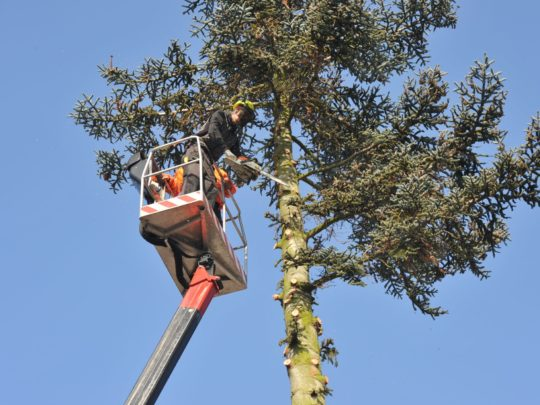 Best Cost for Tree Trimming-Florida Tree Service Pros-We Offer Tree Trimming Services, Tree Removal, Tree Pruning, Tree Cutting, Residential and Commercial Tree Trimming Services, Storm Damage, Emergency Tree Removal, Land Clearing, Tree Companies, Tree Care Service, Stump Grinding, and we're the Best Tree Trimming Company Near You Guaranteed!