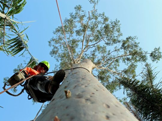Best arborists-Florida Tree Service Pros-We Offer Tree Trimming Services, Tree Removal, Tree Pruning, Tree Cutting, Residential and Commercial Tree Trimming Services, Storm Damage, Emergency Tree Removal, Land Clearing, Tree Companies, Tree Care Service, Stump Grinding, and we're the Best Tree Trimming Company Near You Guaranteed!