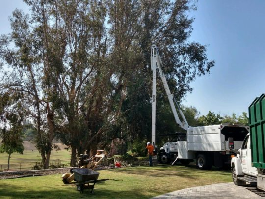 Commercial Tree Services Near Me Florida-Florida Tree Service Pros-We Offer Tree Trimming Services, Tree Removal, Tree Pruning, Tree Cutting, Residential and Commercial Tree Trimming Services, Storm Damage, Emergency Tree Removal, Land Clearing, Tree Companies, Tree Care Service, Stump Grinding, and we're the Best Tree Trimming Company Near You Guaranteed!