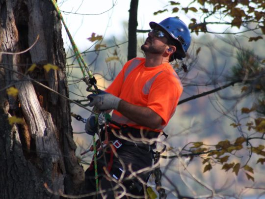Cost for Tree Pruning-Florida Tree Service Pros-We Offer Tree Trimming Services, Tree Removal, Tree Pruning, Tree Cutting, Residential and Commercial Tree Trimming Services, Storm Damage, Emergency Tree Removal, Land Clearing, Tree Companies, Tree Care Service, Stump Grinding, and we're the Best Tree Trimming Company Near You Guaranteed!