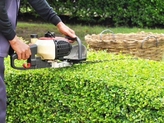 Cost for Tree Trimming-Florida Tree Service Pros-We Offer Tree Trimming Services, Tree Removal, Tree Pruning, Tree Cutting, Residential and Commercial Tree Trimming Services, Storm Damage, Emergency Tree Removal, Land Clearing, Tree Companies, Tree Care Service, Stump Grinding, and we're the Best Tree Trimming Company Near You Guaranteed!