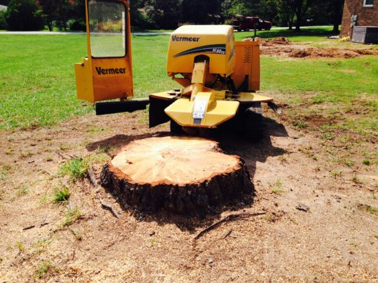 Cost for stump removal-Florida Tree Service Pros-We Offer Tree Trimming Services, Tree Removal, Tree Pruning, Tree Cutting, Residential and Commercial Tree Trimming Services, Storm Damage, Emergency Tree Removal, Land Clearing, Tree Companies, Tree Care Service, Stump Grinding, and we're the Best Tree Trimming Company Near You Guaranteed!