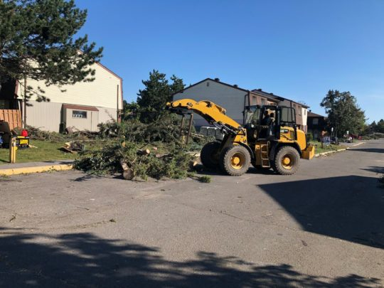 Cost tree removal-Florida Tree Service Pros-We Offer Tree Trimming Services, Tree Removal, Tree Pruning, Tree Cutting, Residential and Commercial Tree Trimming Services, Storm Damage, Emergency Tree Removal, Land Clearing, Tree Companies, Tree Care Service, Stump Grinding, and we're the Best Tree Trimming Company Near You Guaranteed!