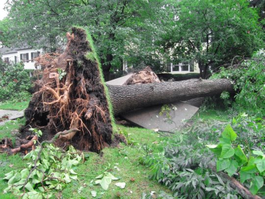 Emergency Tree Removal Near Me Florida-Florida Tree Service Pros-We Offer Tree Trimming Services, Tree Removal, Tree Pruning, Tree Cutting, Residential and Commercial Tree Trimming Services, Storm Damage, Emergency Tree Removal, Land Clearing, Tree Companies, Tree Care Service, Stump Grinding, and we're the Best Tree Trimming Company Near You Guaranteed!