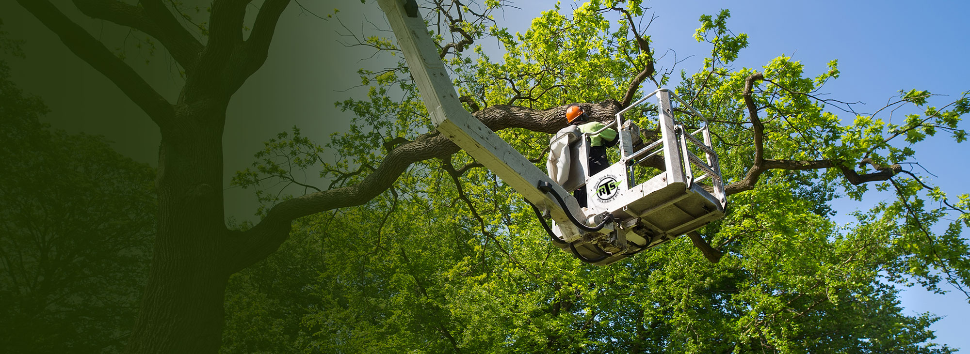 Florida Tree Service Pros Banner Image2-We Offer Tree Trimming Services, Tree Removal, Tree Pruning, Tree Cutting, Residential and Commercial Tree Trimming Services, Storm Damage, Emergency Tree Removal, Land Clearing, Tree Companies, Tree Care Service, Stump Grinding, and we're the Best Tree Trimming Company Near You Guaranteed!