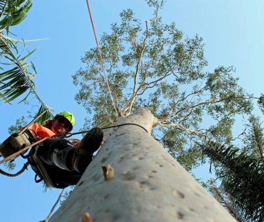 Florida Tree Service Pros Image1-We Offer Tree Trimming Services, Tree Removal, Tree Pruning, Tree Cutting, Residential and Commercial Tree Trimming Services, Storm Damage, Emergency Tree Removal, Land Clearing, Tree Companies, Tree Care Service, Stump Grinding, and we're the Best Tree Trimming Company Near You Guaranteed!