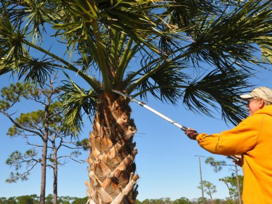 How Much Does Palm Tree Trimming Cost-Florida Tree Service Pros-We Offer Tree Trimming Services, Tree Removal, Tree Pruning, Tree Cutting, Residential and Commercial Tree Trimming Services, Storm Damage, Emergency Tree Removal, Land Clearing, Tree Companies, Tree Care Service, Stump Grinding, and we're the Best Tree Trimming Company Near You Guaranteed!
