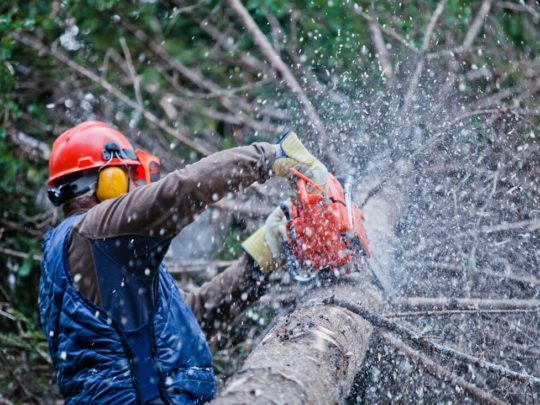 How Much Does Tree Trimming Cost-Florida Tree Service Pros-We Offer Tree Trimming Services, Tree Removal, Tree Pruning, Tree Cutting, Residential and Commercial Tree Trimming Services, Storm Damage, Emergency Tree Removal, Land Clearing, Tree Companies, Tree Care Service, Stump Grinding, and we're the Best Tree Trimming Company Near You Guaranteed!