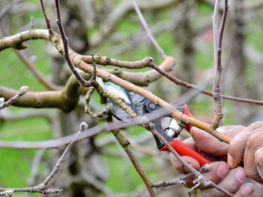How much does Tree Pruning cost-Florida Tree Service Pros-We Offer Tree Trimming Services, Tree Removal, Tree Pruning, Tree Cutting, Residential and Commercial Tree Trimming Services, Storm Damage, Emergency Tree Removal, Land Clearing, Tree Companies, Tree Care Service, Stump Grinding, and we're the Best Tree Trimming Company Near You Guaranteed!