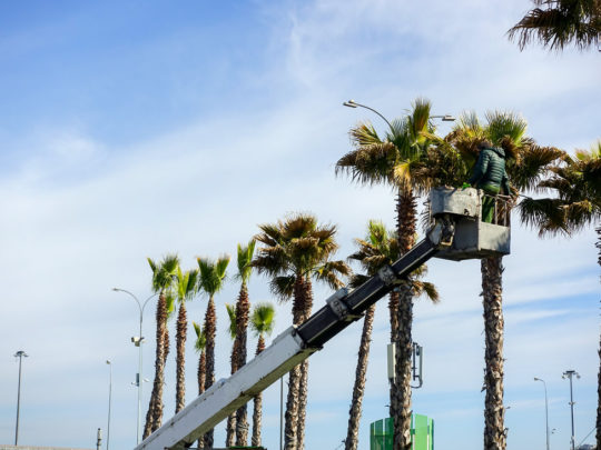 How much does it cost to trim a palm tree-Florida Tree Service Pros-We Offer Tree Trimming Services, Tree Removal, Tree Pruning, Tree Cutting, Residential and Commercial Tree Trimming Services, Storm Damage, Emergency Tree Removal, Land Clearing, Tree Companies, Tree Care Service, Stump Grinding, and we're the Best Tree Trimming Company Near You Guaranteed!