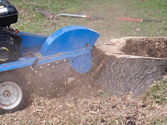 How much does stump grinding cost-Florida Tree Service Pros-We Offer Tree Trimming Services, Tree Removal, Tree Pruning, Tree Cutting, Residential and Commercial Tree Trimming Services, Storm Damage, Emergency Tree Removal, Land Clearing, Tree Companies, Tree Care Service, Stump Grinding, and we're the Best Tree Trimming Company Near You Guaranteed!