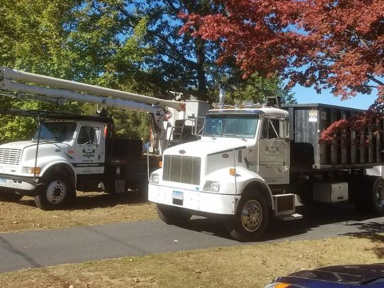 How much does tree removal cost-Florida Tree Service Pros-We Offer Tree Trimming Services, Tree Removal, Tree Pruning, Tree Cutting, Residential and Commercial Tree Trimming Services, Storm Damage, Emergency Tree Removal, Land Clearing, Tree Companies, Tree Care Service, Stump Grinding, and we're the Best Tree Trimming Company Near You Guaranteed!