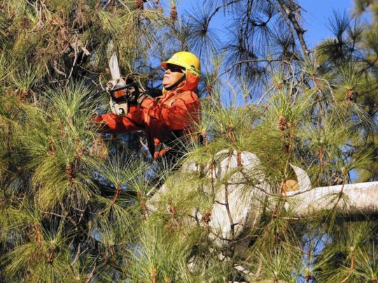 How much should Tree Trimming cost-Florida Tree Service Pros-We Offer Tree Trimming Services, Tree Removal, Tree Pruning, Tree Cutting, Residential and Commercial Tree Trimming Services, Storm Damage, Emergency Tree Removal, Land Clearing, Tree Companies, Tree Care Service, Stump Grinding, and we're the Best Tree Trimming Company Near You Guaranteed!