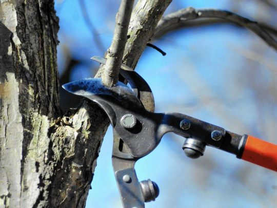 How to prune a tree-Florida Tree Service Pros-We Offer Tree Trimming Services, Tree Removal, Tree Pruning, Tree Cutting, Residential and Commercial Tree Trimming Services, Storm Damage, Emergency Tree Removal, Land Clearing, Tree Companies, Tree Care Service, Stump Grinding, and we're the Best Tree Trimming Company Near You Guaranteed!