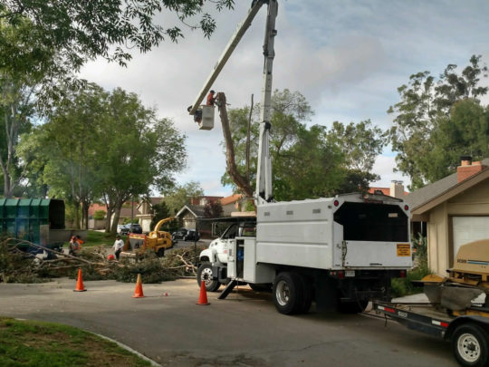 Large tree removal cost-Florida Tree Service Pros-We Offer Tree Trimming Services, Tree Removal, Tree Pruning, Tree Cutting, Residential and Commercial Tree Trimming Services, Storm Damage, Emergency Tree Removal, Land Clearing, Tree Companies, Tree Care Service, Stump Grinding, and we're the Best Tree Trimming Company Near You Guaranteed!