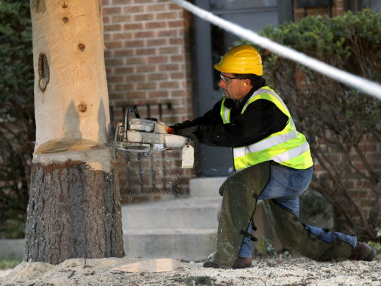Local tree removal services-Florida Tree Service Pros-We Offer Tree Trimming Services, Tree Removal, Tree Pruning, Tree Cutting, Residential and Commercial Tree Trimming Services, Storm Damage, Emergency Tree Removal, Land Clearing, Tree Companies, Tree Care Service, Stump Grinding, and we're the Best Tree Trimming Company Near You Guaranteed!