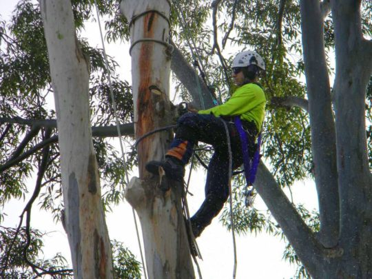 Local tree trimming services-Florida Tree Service Pros-We Offer Tree Trimming Services, Tree Removal, Tree Pruning, Tree Cutting, Residential and Commercial Tree Trimming Services, Storm Damage, Emergency Tree Removal, Land Clearing, Tree Companies, Tree Care Service, Stump Grinding, and we're the Best Tree Trimming Company Near You Guaranteed!