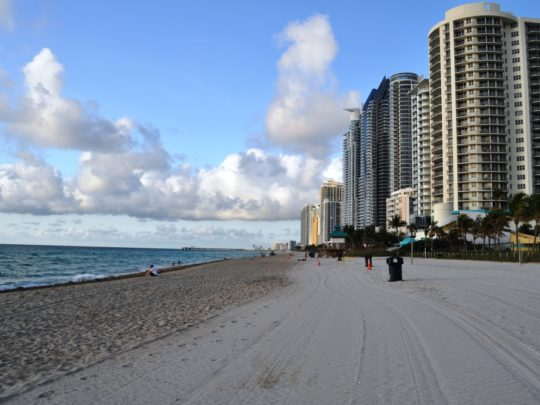 North Miami Beach-Florida Tree Service Pros-We Offer Tree Trimming Services, Tree Removal, Tree Pruning, Tree Cutting, Residential and Commercial Tree Trimming Services, Storm Damage, Emergency Tree Removal, Land Clearing, Tree Companies, Tree Care Service, Stump Grinding, and we're the Best Tree Trimming Company Near You Guaranteed!