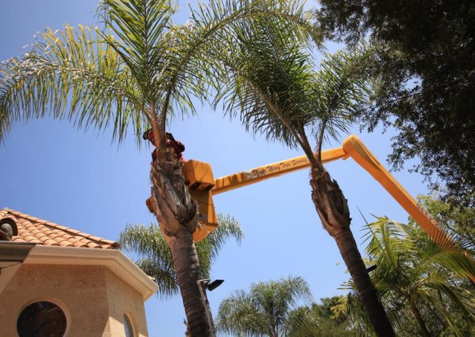 Palm Tree Trimming-Florida Tree Service Pros-We Offer Tree Trimming Services, Tree Removal, Tree Pruning, Tree Cutting, Residential and Commercial Tree Trimming Services, Storm Damage, Emergency Tree Removal, Land Clearing, Tree Companies, Tree Care Service, Stump Grinding, and we're the Best Tree Trimming Company Near You Guaranteed!