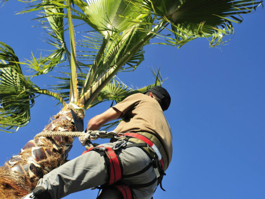 Palm Tree Trimming Near Me-Florida Tree Service Pros-We Offer Tree Trimming Services, Tree Removal, Tree Pruning, Tree Cutting, Residential and Commercial Tree Trimming Services, Storm Damage, Emergency Tree Removal, Land Clearing, Tree Companies, Tree Care Service, Stump Grinding, and we're the Best Tree Trimming Company Near You Guaranteed!