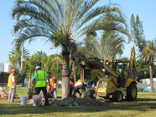 Palm tree service-Florida Tree Service Pros-We Offer Tree Trimming Services, Tree Removal, Tree Pruning, Tree Cutting, Residential and Commercial Tree Trimming Services, Storm Damage, Emergency Tree Removal, Land Clearing, Tree Companies, Tree Care Service, Stump Grinding, and we're the Best Tree Trimming Company Near You Guaranteed!