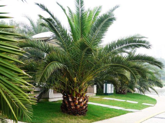 Palm tree service costs-Florida Tree Service Pros-We Offer Tree Trimming Services, Tree Removal, Tree Pruning, Tree Cutting, Residential and Commercial Tree Trimming Services, Storm Damage, Emergency Tree Removal, Land Clearing, Tree Companies, Tree Care Service, Stump Grinding, and we're the Best Tree Trimming Company Near You Guaranteed!
