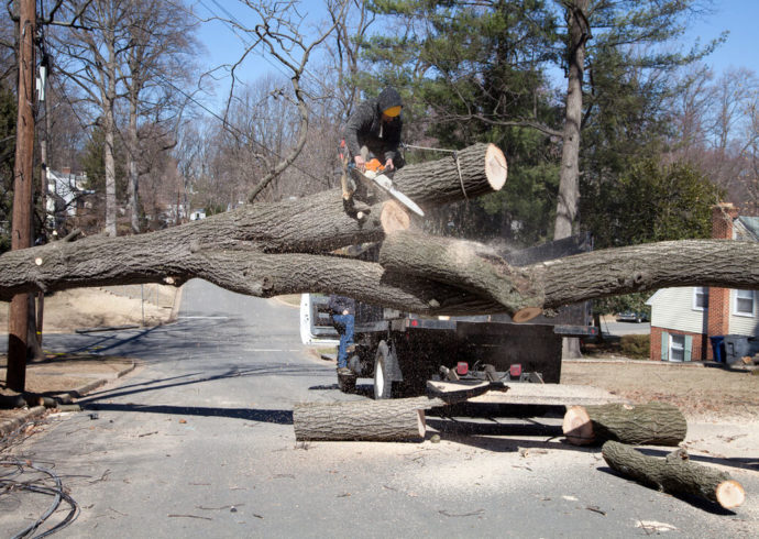 Residential Tree Services-Florida Tree Service Pros-We Offer Tree Trimming Services, Tree Removal, Tree Pruning, Tree Cutting, Residential and Commercial Tree Trimming Services, Storm Damage, Emergency Tree Removal, Land Clearing, Tree Companies, Tree Care Service, Stump Grinding, and we're the Best Tree Trimming Company Near You Guaranteed!