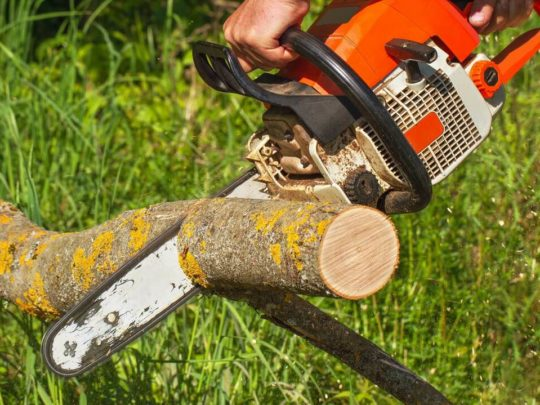 Service trees-Florida Tree Service Pros-We Offer Tree Trimming Services, Tree Removal, Tree Pruning, Tree Cutting, Residential and Commercial Tree Trimming Services, Storm Damage, Emergency Tree Removal, Land Clearing, Tree Companies, Tree Care Service, Stump Grinding, and we're the Best Tree Trimming Company Near You Guaranteed!