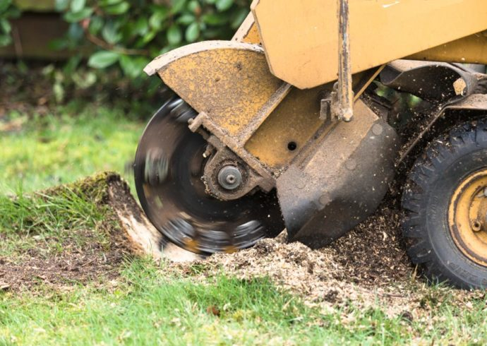 Stump Grinding-Florida Tree Service Pros-We Offer Tree Trimming Services, Tree Removal, Tree Pruning, Tree Cutting, Residential and Commercial Tree Trimming Services, Storm Damage, Emergency Tree Removal, Land Clearing, Tree Companies, Tree Care Service, Stump Grinding, and we're the Best Tree Trimming Company Near You Guaranteed!