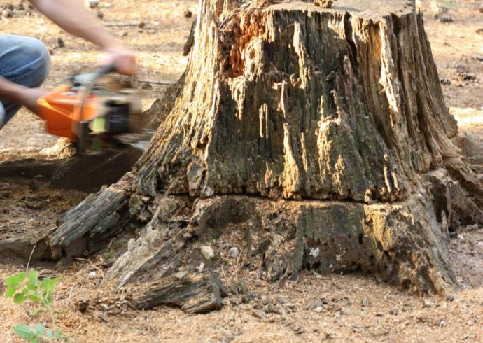 Stump Removal-Florida Tree Service Pros-We Offer Tree Trimming Services, Tree Removal, Tree Pruning, Tree Cutting, Residential and Commercial Tree Trimming Services, Storm Damage, Emergency Tree Removal, Land Clearing, Tree Companies, Tree Care Service, Stump Grinding, and we're the Best Tree Trimming Company Near You Guaranteed!