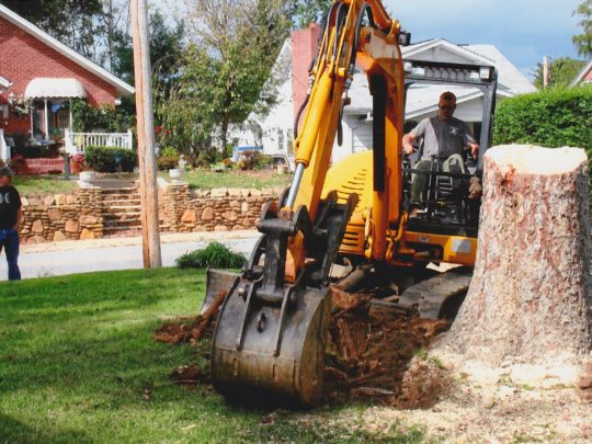 Stump removal cost-Florida Tree Service Pros-We Offer Tree Trimming Services, Tree Removal, Tree Pruning, Tree Cutting, Residential and Commercial Tree Trimming Services, Storm Damage, Emergency Tree Removal, Land Clearing, Tree Companies, Tree Care Service, Stump Grinding, and we're the Best Tree Trimming Company Near You Guaranteed!