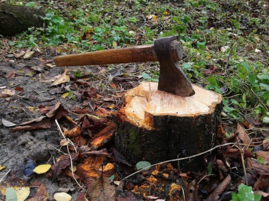 Stump removal how to-Florida Tree Service Pros-We Offer Tree Trimming Services, Tree Removal, Tree Pruning, Tree Cutting, Residential and Commercial Tree Trimming Services, Storm Damage, Emergency Tree Removal, Land Clearing, Tree Companies, Tree Care Service, Stump Grinding, and we're the Best Tree Trimming Company Near You Guaranteed!