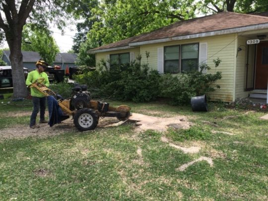 Stump removal service near me-Florida Tree Service Pros-We Offer Tree Trimming Services, Tree Removal, Tree Pruning, Tree Cutting, Residential and Commercial Tree Trimming Services, Storm Damage, Emergency Tree Removal, Land Clearing, Tree Companies, Tree Care Service, Stump Grinding, and we're the Best Tree Trimming Company Near You Guaranteed!