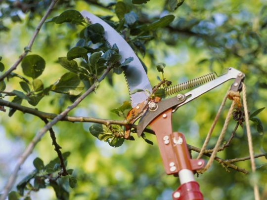 Tools for Tree Pruning-Florida Tree Service Pros-We Offer Tree Trimming Services, Tree Removal, Tree Pruning, Tree Cutting, Residential and Commercial Tree Trimming Services, Storm Damage, Emergency Tree Removal, Land Clearing, Tree Companies, Tree Care Service, Stump Grinding, and we're the Best Tree Trimming Company Near You Guaranteed!
