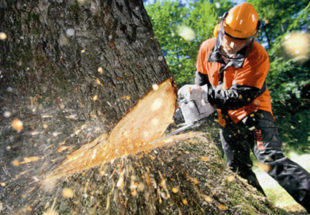 Tree Cutting-Florida Tree Service Pros-We Offer Tree Trimming Services, Tree Removal, Tree Pruning, Tree Cutting, Residential and Commercial Tree Trimming Services, Storm Damage, Emergency Tree Removal, Land Clearing, Tree Companies, Tree Care Service, Stump Grinding, and we're the Best Tree Trimming Company Near You Guaranteed!