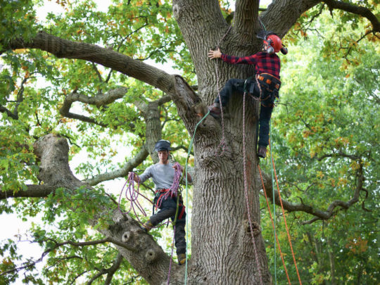 Tree Maintenance Company-Florida Tree Service Pros-We Offer Tree Trimming Services, Tree Removal, Tree Pruning, Tree Cutting, Residential and Commercial Tree Trimming Services, Storm Damage, Emergency Tree Removal, Land Clearing, Tree Companies, Tree Care Service, Stump Grinding, and we're the Best Tree Trimming Company Near You Guaranteed!