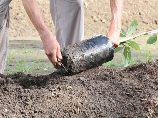 Tree Planting Near Me-Florida Tree Service Pros-We Offer Tree Trimming Services, Tree Removal, Tree Pruning, Tree Cutting, Residential and Commercial Tree Trimming Services, Storm Damage, Emergency Tree Removal, Land Clearing, Tree Companies, Tree Care Service, Stump Grinding, and we're the Best Tree Trimming Company Near You Guaranteed!