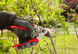 Tree Pruning-Florida Tree Service Pros-We Offer Tree Trimming Services, Tree Removal, Tree Pruning, Tree Cutting, Residential and Commercial Tree Trimming Services, Storm Damage, Emergency Tree Removal, Land Clearing, Tree Companies, Tree Care Service, Stump Grinding, and we're the Best Tree Trimming Company Near You Guaranteed!