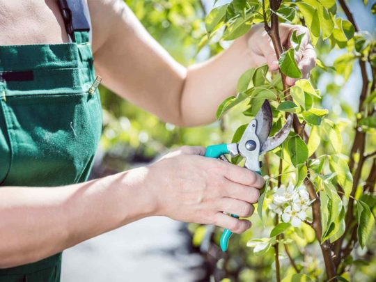 Tree Pruning Near Me-Florida Tree Service Pros-We Offer Tree Trimming Services, Tree Removal, Tree Pruning, Tree Cutting, Residential and Commercial Tree Trimming Services, Storm Damage, Emergency Tree Removal, Land Clearing, Tree Companies, Tree Care Service, Stump Grinding, and we're the Best Tree Trimming Company Near You Guaranteed!