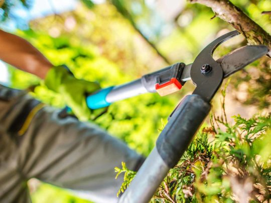 Tree Pruning companies-Florida Tree Service Pros-We Offer Tree Trimming Services, Tree Removal, Tree Pruning, Tree Cutting, Residential and Commercial Tree Trimming Services, Storm Damage, Emergency Tree Removal, Land Clearing, Tree Companies, Tree Care Service, Stump Grinding, and we're the Best Tree Trimming Company Near You Guaranteed!