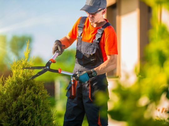 Tree Pruning cost-Florida Tree Service Pros-We Offer Tree Trimming Services, Tree Removal, Tree Pruning, Tree Cutting, Residential and Commercial Tree Trimming Services, Storm Damage, Emergency Tree Removal, Land Clearing, Tree Companies, Tree Care Service, Stump Grinding, and we're the Best Tree Trimming Company Near You Guaranteed!