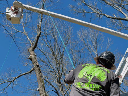 Tree Pruning service-Florida Tree Service Pros-We Offer Tree Trimming Services, Tree Removal, Tree Pruning, Tree Cutting, Residential and Commercial Tree Trimming Services, Storm Damage, Emergency Tree Removal, Land Clearing, Tree Companies, Tree Care Service, Stump Grinding, and we're the Best Tree Trimming Company Near You Guaranteed!