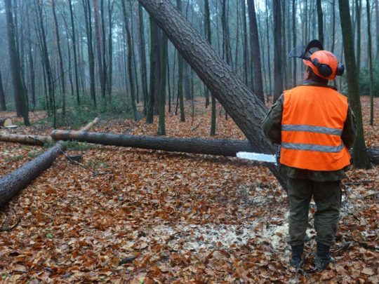 Tree Removal Company-Florida Tree Service Pros-We Offer Tree Trimming Services, Tree Removal, Tree Pruning, Tree Cutting, Residential and Commercial Tree Trimming Services, Storm Damage, Emergency Tree Removal, Land Clearing, Tree Companies, Tree Care Service, Stump Grinding, and we're the Best Tree Trimming Company Near You Guaranteed!