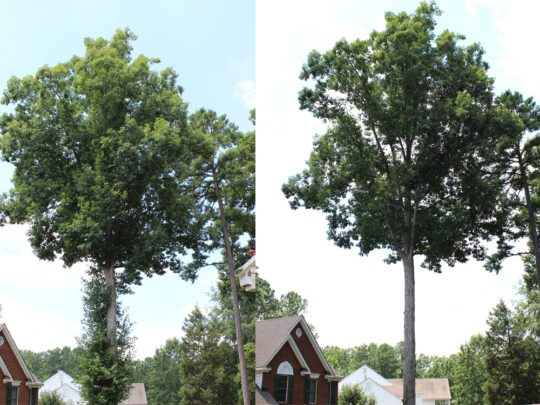 Tree Trimming Before and After-Florida Tree Service Pros-We Offer Tree Trimming Services, Tree Removal, Tree Pruning, Tree Cutting, Residential and Commercial Tree Trimming Services, Storm Damage, Emergency Tree Removal, Land Clearing, Tree Companies, Tree Care Service, Stump Grinding, and we're the Best Tree Trimming Company Near You Guaranteed!