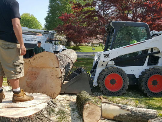 Tree Trimming Business-Florida Tree Service Pros-We Offer Tree Trimming Services, Tree Removal, Tree Pruning, Tree Cutting, Residential and Commercial Tree Trimming Services, Storm Damage, Emergency Tree Removal, Land Clearing, Tree Companies, Tree Care Service, Stump Grinding, and we're the Best Tree Trimming Company Near You Guaranteed!