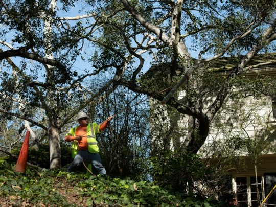 Tree Trimming Contractors-Florida Tree Service Pros-We Offer Tree Trimming Services, Tree Removal, Tree Pruning, Tree Cutting, Residential and Commercial Tree Trimming Services, Storm Damage, Emergency Tree Removal, Land Clearing, Tree Companies, Tree Care Service, Stump Grinding, and we're the Best Tree Trimming Company Near You Guaranteed!