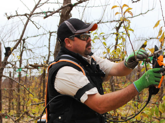 Tree Trimming Devices-Florida Tree Service Pros-We Offer Tree Trimming Services, Tree Removal, Tree Pruning, Tree Cutting, Residential and Commercial Tree Trimming Services, Storm Damage, Emergency Tree Removal, Land Clearing, Tree Companies, Tree Care Service, Stump Grinding, and we're the Best Tree Trimming Company Near You Guaranteed!