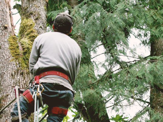 Tree Trimming Experts-Florida Tree Service Pros-We Offer Tree Trimming Services, Tree Removal, Tree Pruning, Tree Cutting, Residential and Commercial Tree Trimming Services, Storm Damage, Emergency Tree Removal, Land Clearing, Tree Companies, Tree Care Service, Stump Grinding, and we're the Best Tree Trimming Company Near You Guaranteed!
